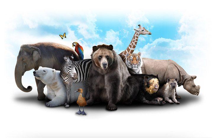 animal cruelty matters